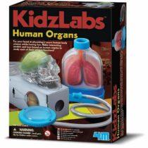 """4M """"Kidz Labs Human Organs"""" Toy"""
